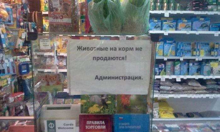 obiyavleniya_06