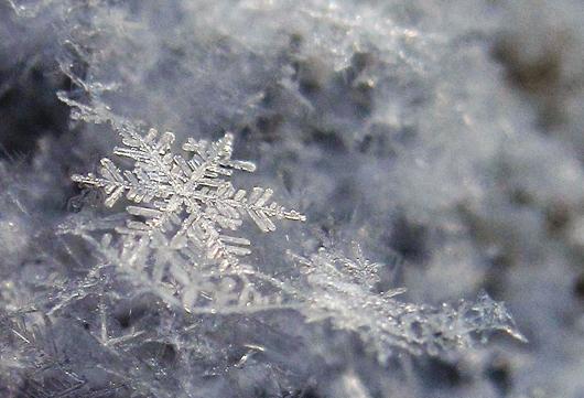 snowflake_captpiper_0