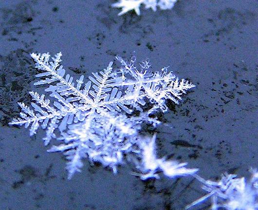 snowflake_rachelellen_0