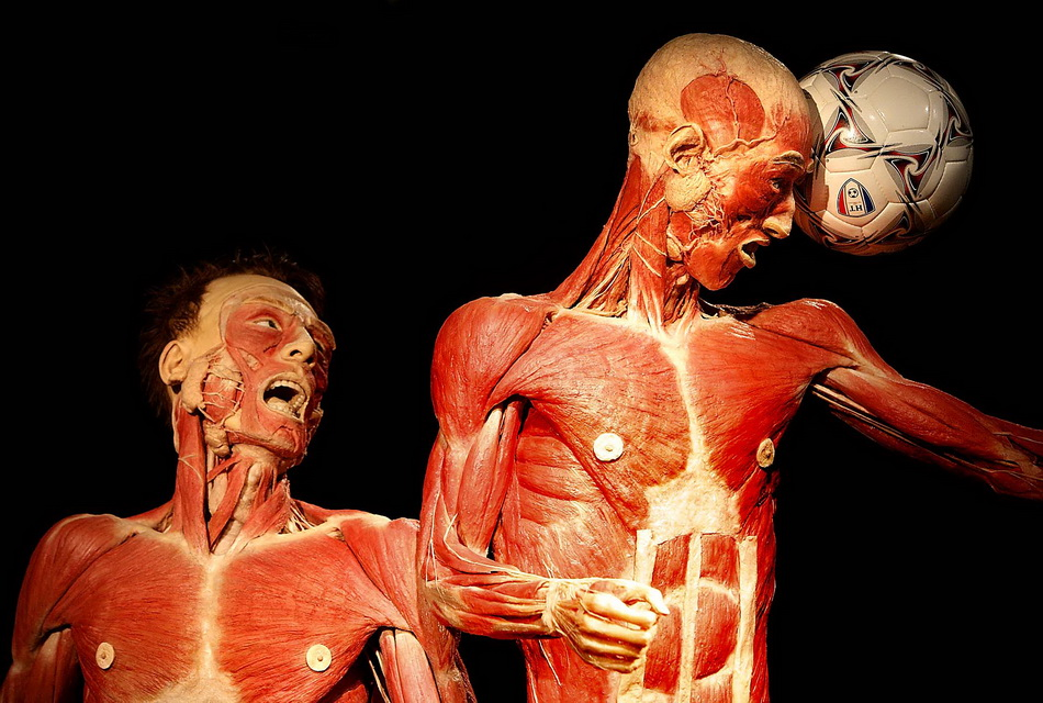 Controversial Body Worlds Exhibition Opens