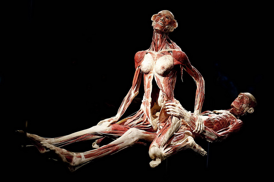 "A sculpture by German ""plastinator"" Gunt"