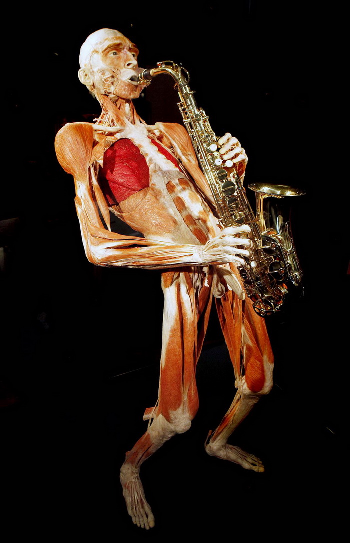 "A plastinated ""Saxophone player"" sculptu"