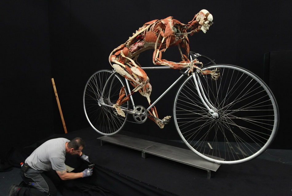 Body Worlds Exhibition To Open In Berlin