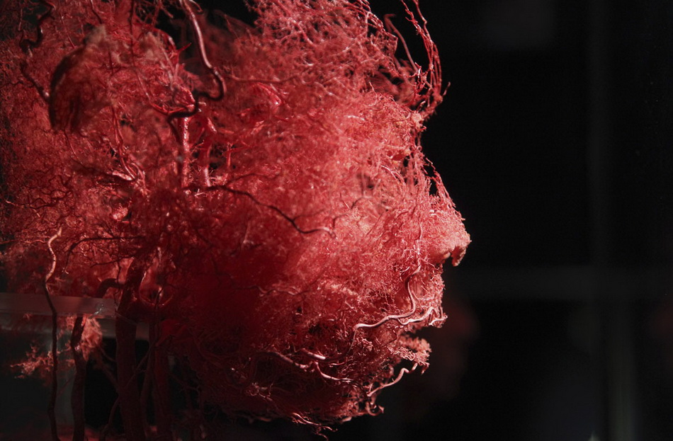 "Plastinated blood vessels of an human face are seen during a media viewing for the exhibition ""The Human Body"" in Ostend"