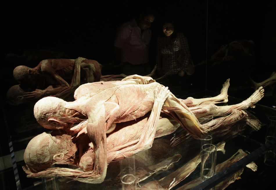 Plastinated human bodies in a position simulating sexual intercourse are seen at Body Worlds exhibition by von Hagen at Universum Museum in Mexico City