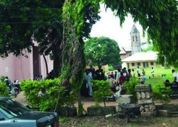 В Нигерии нашли «исцеляющее» дерево