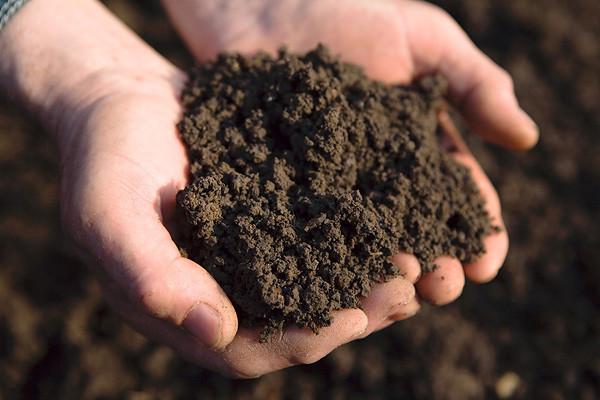 Ешь землю, чтобы быть здоровым!