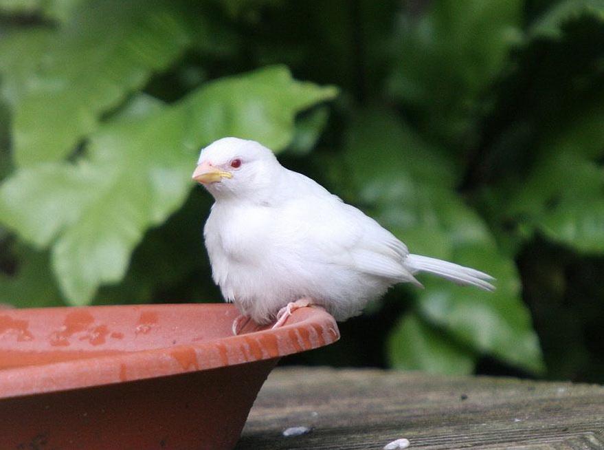 albinos (11)