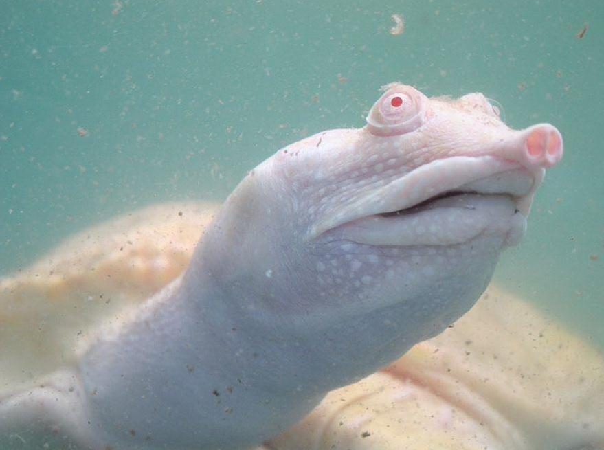 albinos (13)