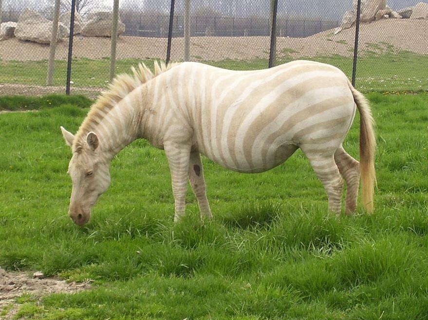 albinos (22)