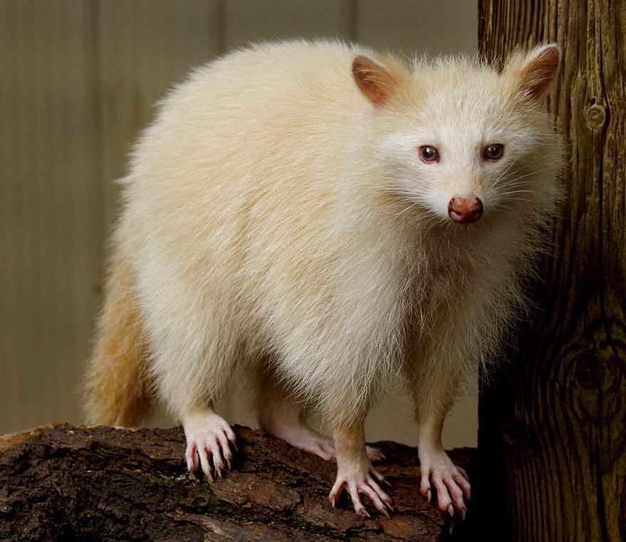 albinos (25)