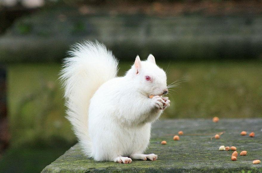 albinos (4)