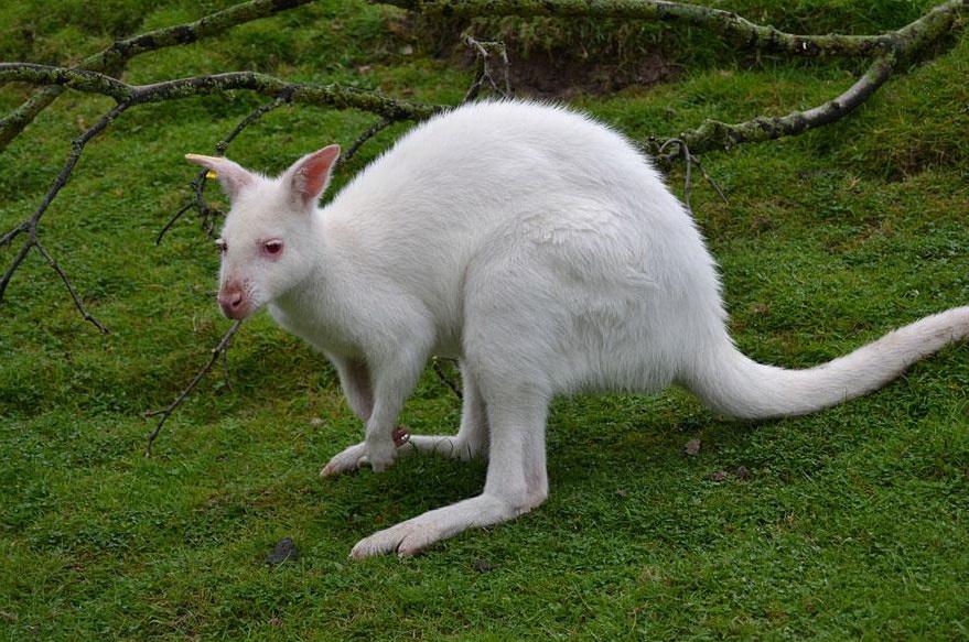 albinos (7)