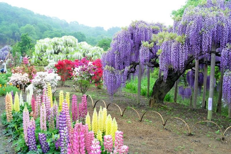3-Kawachi Fuji Garden