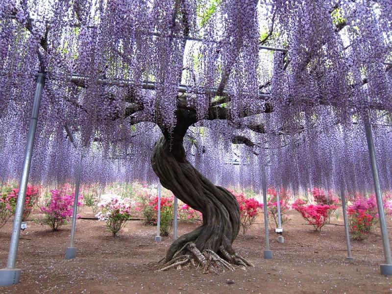 4-Kawachi Fuji Garden