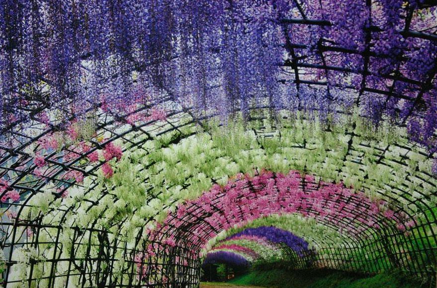 wisteria-flower-tunnel-kawachi-fuji-garden-japan-11