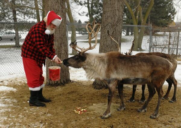 Santa-feeding-reindeer-6666