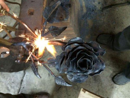 роза-10