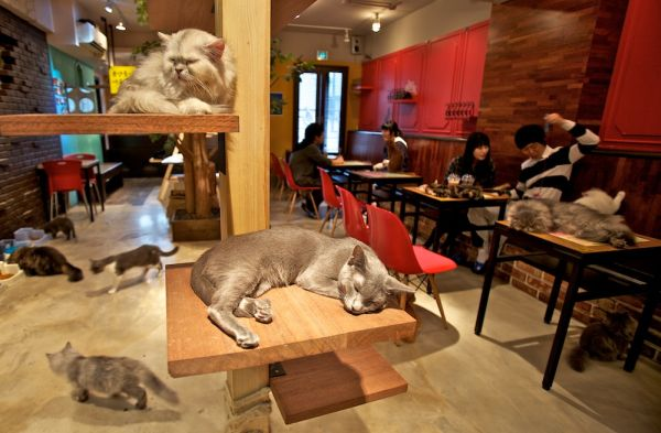 cat-cafe-montreal-00