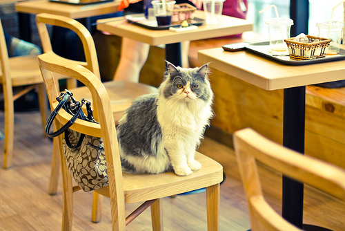 Cat in Chair at Cat Cafe