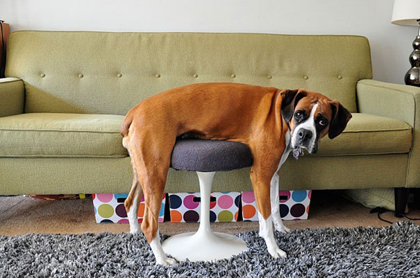 cats-dogs-furniture (1)