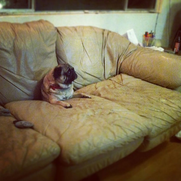 cats-dogs-furniture (11)