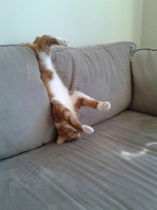cats-dogs-furniture (15)