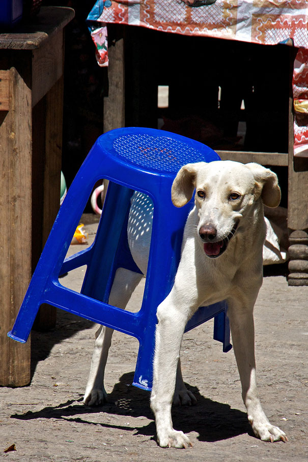 cats-dogs-furniture (25)