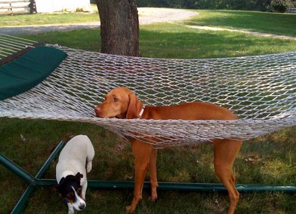 cats-dogs-furniture (9)
