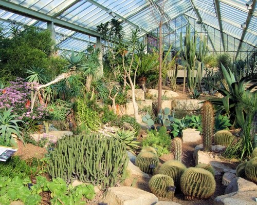 kew-gardens-cactus