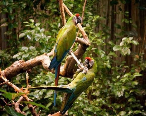 montreal-biodome-parrots