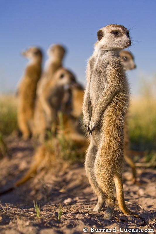 Meerkat Group
