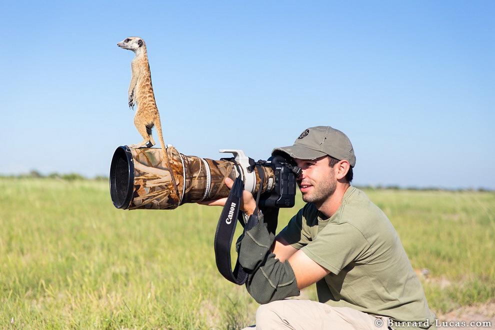 smelie-surikati-4