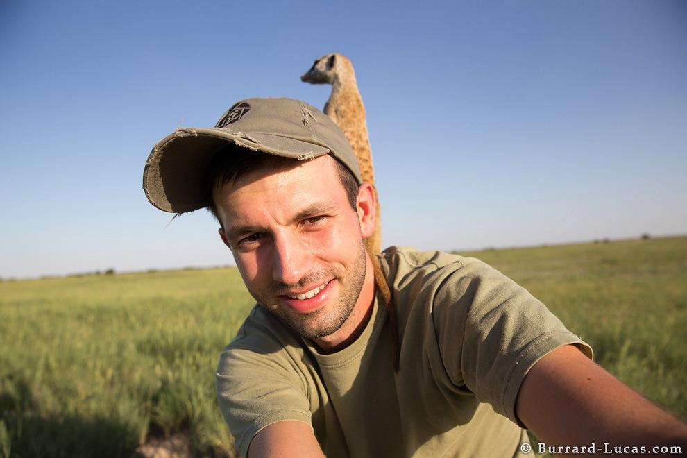 smelie-surikati-5