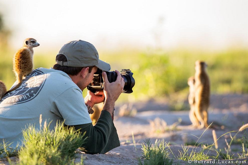 smelie-surikati-7