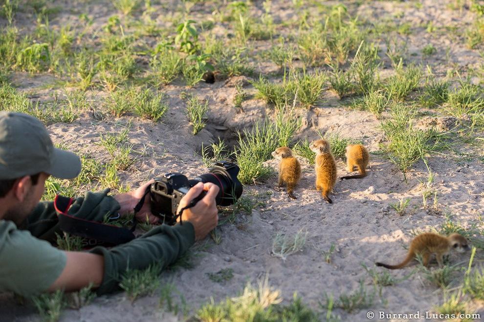 smelie-surikati-9
