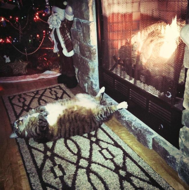 spyascie-koty-13