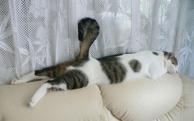 spyascie-koty-18