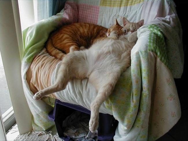 spyascie-koty-19