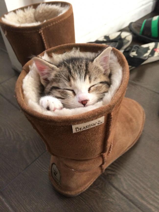 spyascie-koty-7