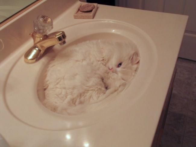 spyascie-koty-9