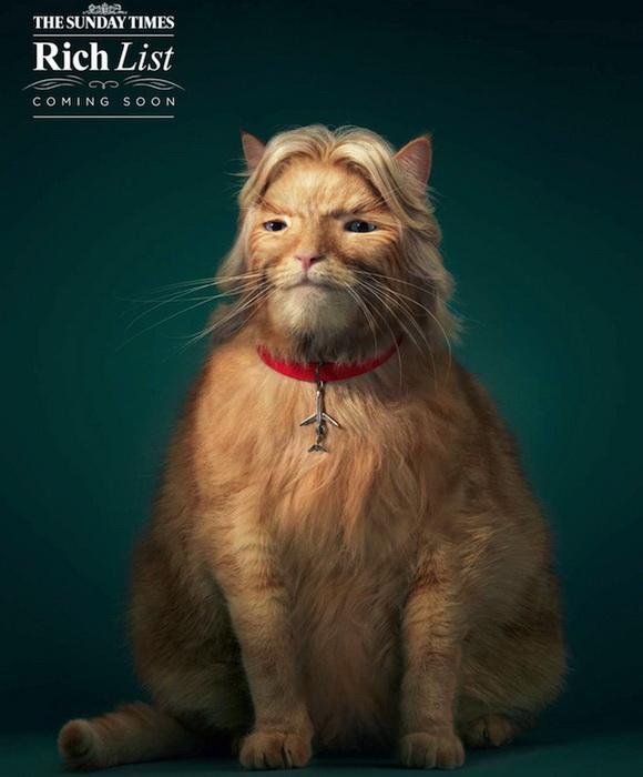 fat-cat-3