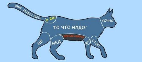 1405509685_kak-gladit-zhivotnyh-13