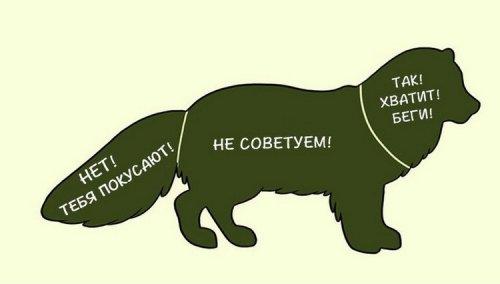 1405509687_kak-gladit-zhivotnyh-1