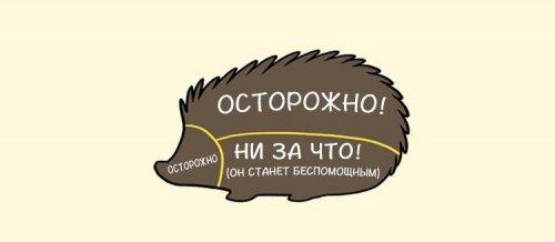 1405509702_kak-gladit-zhivotnyh-8
