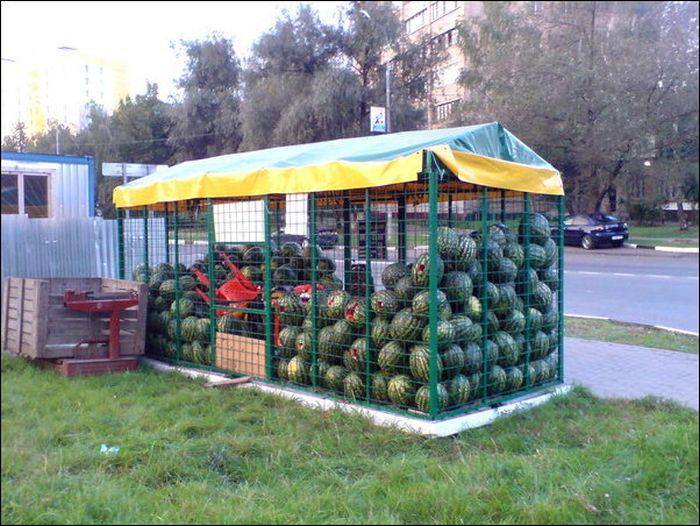 vorishka-nahodchivyy-krasivye-fotografii-neobychnye-fotografii_6982839160