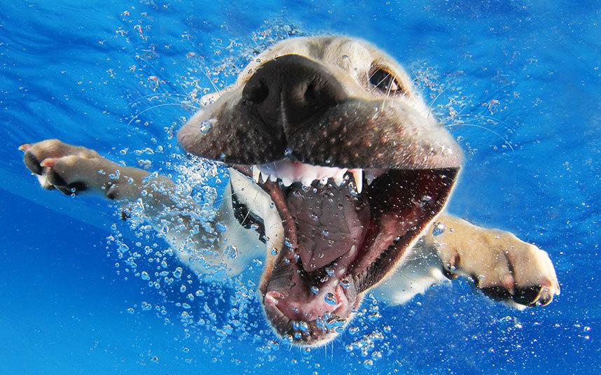 underwater-dogs-1_3040255k