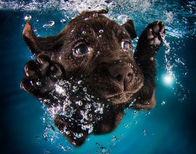 underwater-dogs-3-_3040264k
