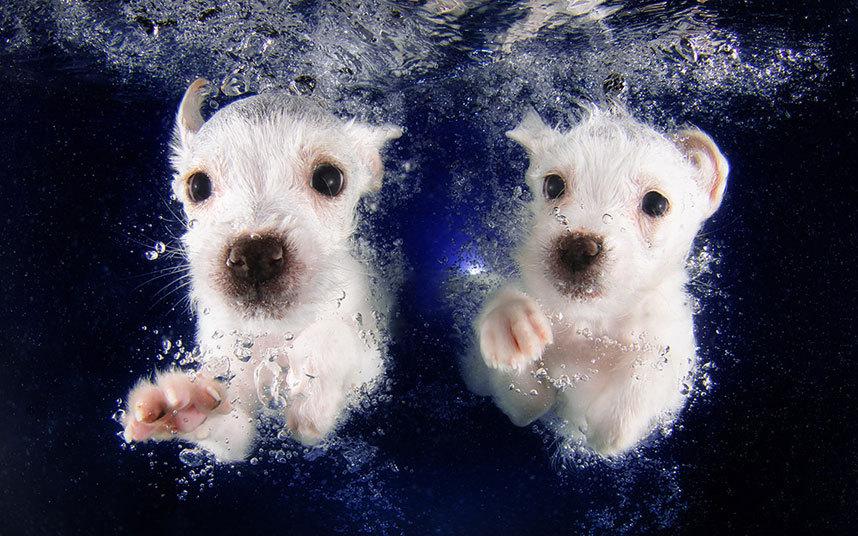 underwater-dogs-4-_3040267k