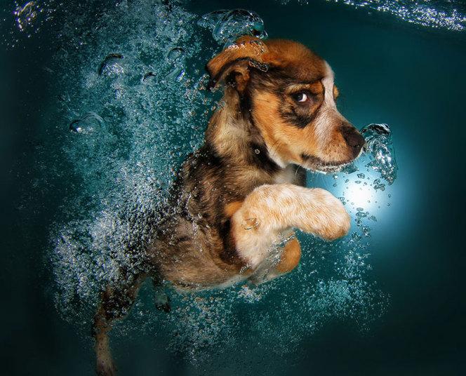 underwater-dogs-8-_3040269k